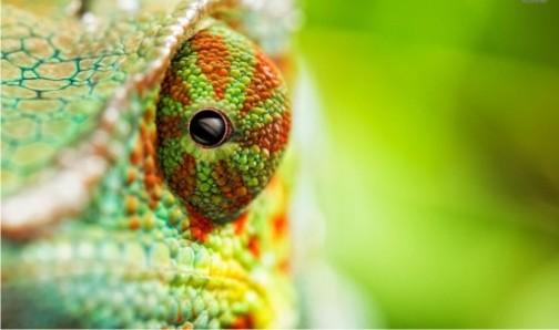 chameleon-chill