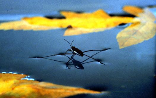 Aquatic-insects