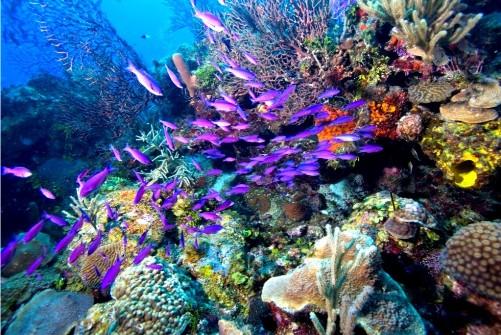 best-coral-reef