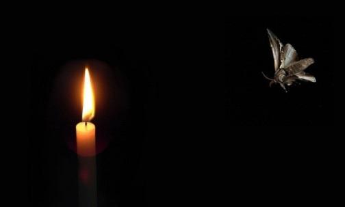 ngengat-menuju-cahaya
