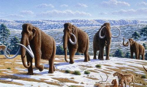 Mammoth di Zaman Es