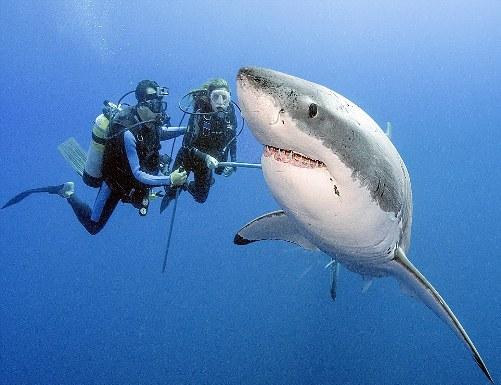 avoid shark