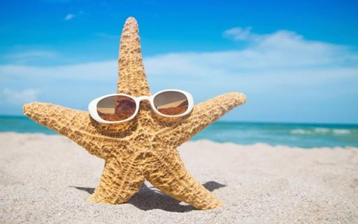 bintang-laut-imut-lucu