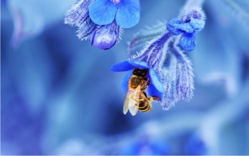 lebah-bunga