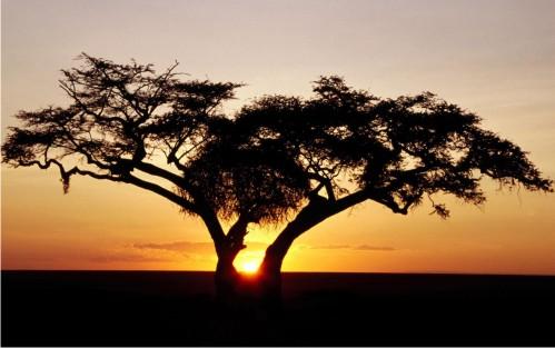 pohon-senja-alam-damai