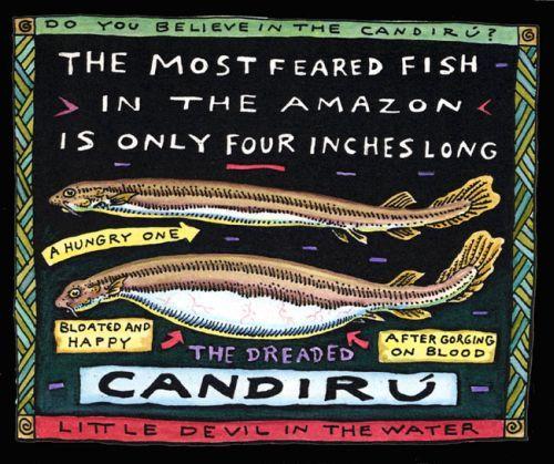 Candiru deadly