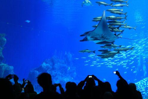 Chimelong Ocean Kingdom aqua