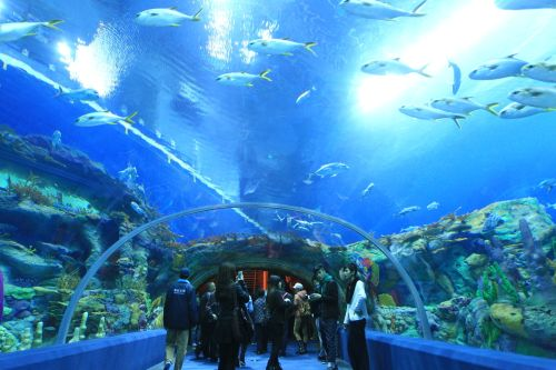 Chimelong Ocean Kingdom-aquariums