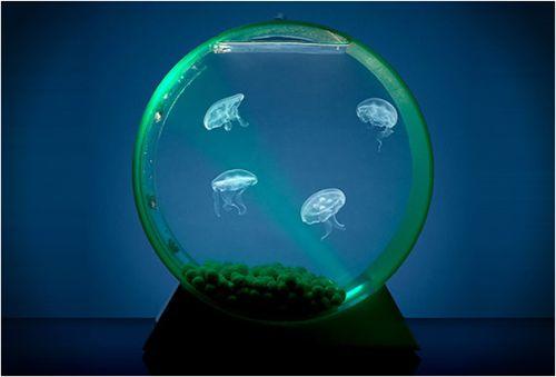 Creative Aquarium