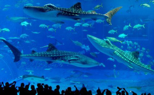 Ocean Kingdom aquarium