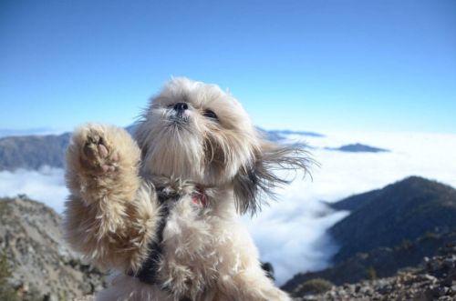 Anjing petualang selfie