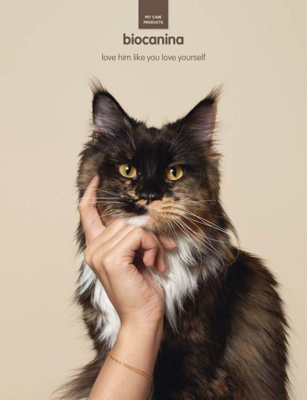 Biocanina Pet Creative Advertisement