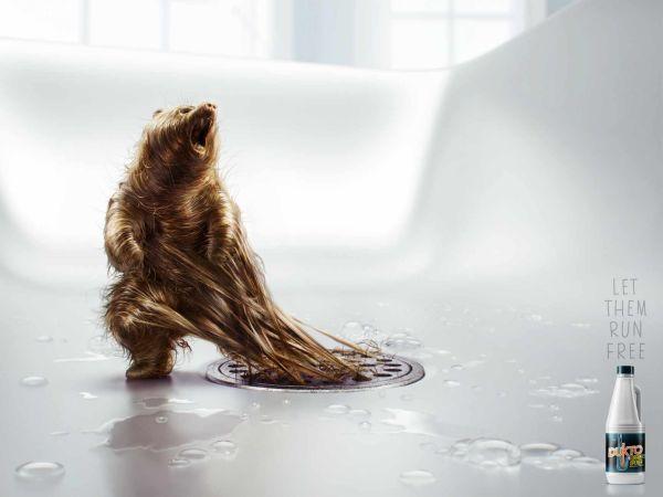 Dukto bear Creative Advertisement