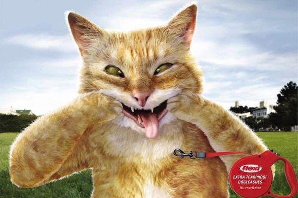 Flexi Dogleashes Creative Advertisement
