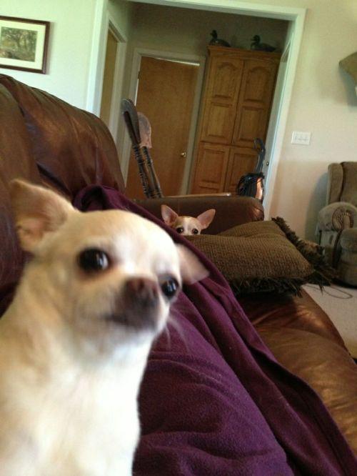 Foto Anjing imut Selfie