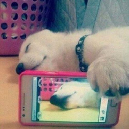 Foto anjing pura-pura tidur selfie