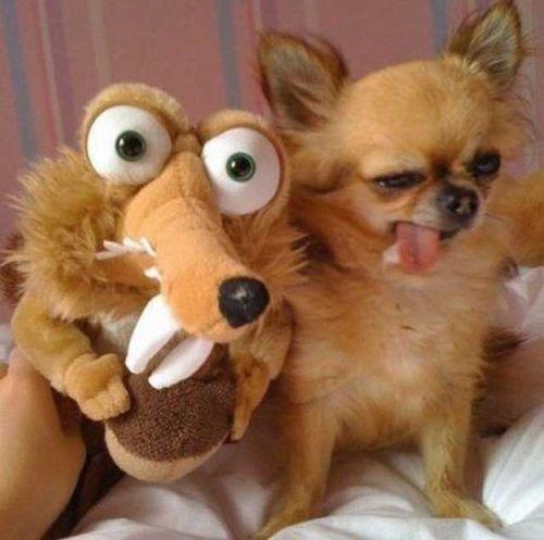 Foto lucu anjing dan boneka selfie