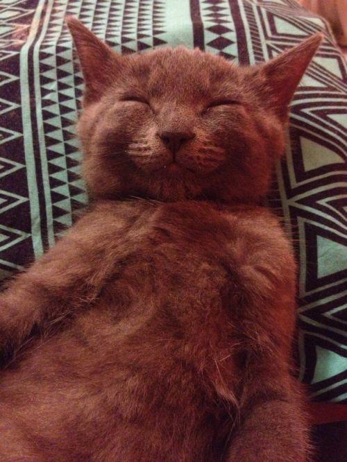 Foto lucu dan imut kucing selfie