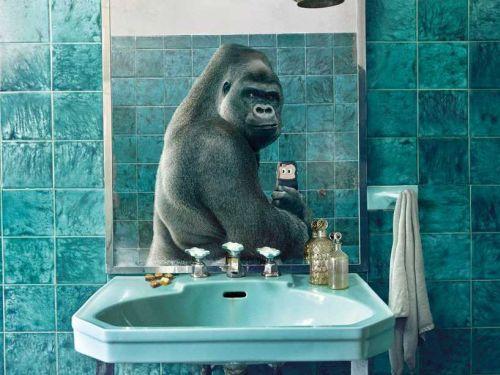 Foto lucu gorilla selfie