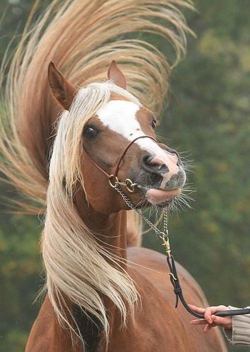 Foto lucu kuda bergaya selfie