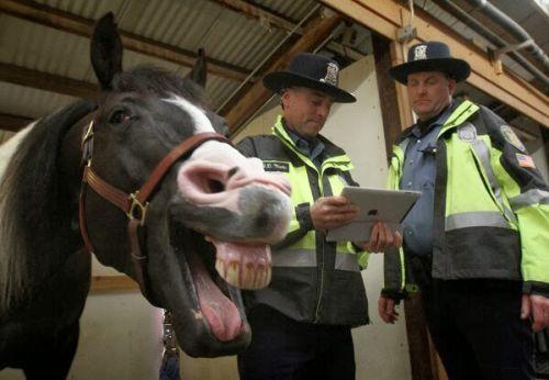 Foto lucu kuda gaya selfie