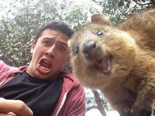 Foto lucu tupai selfie