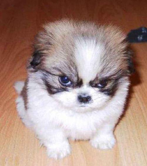 13+ Gambar anjing marah animasi terupdate
