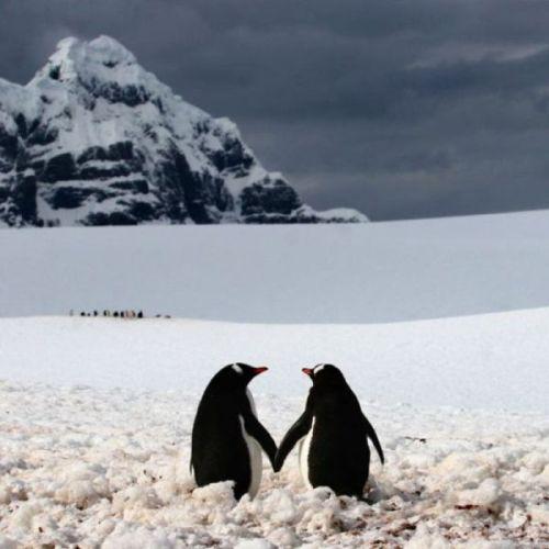 Kasing sayang penguin pada pasangannya 3