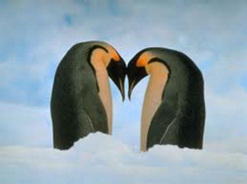 Kasing sayang penguin pada pasangannya