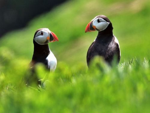 Kasing sayang sepasang burung pada pasangannya