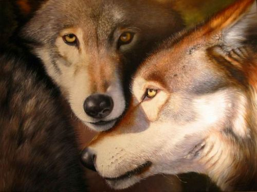 Kasing sayang serigala pada pasangannya