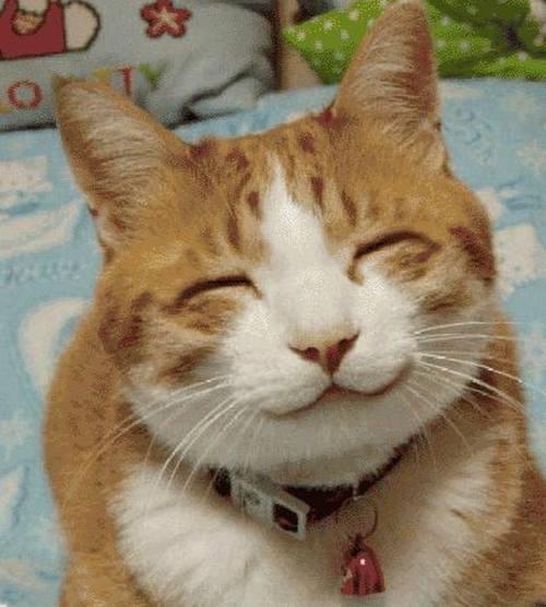 Download 101+  Gambar Kucing Terlucu Paling Bagus