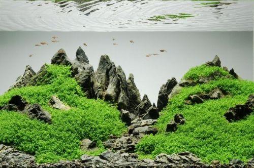 Akuarium Aquascape