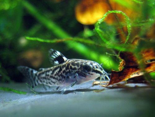 Aquascape Tanaman Air Dan Ikan Hindarilah Kesalahan Ini Lampu Kecil