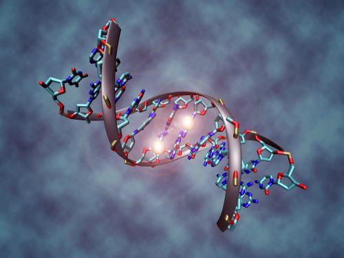 Gen DNA