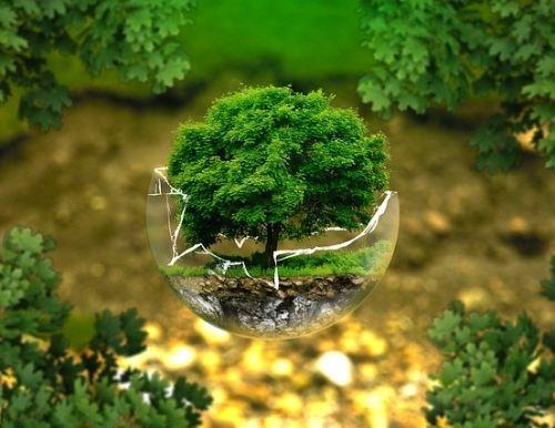 Beautiful Earth Tree