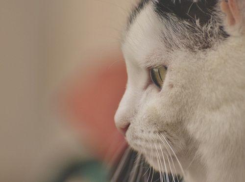 Cute Daydreaming Cat