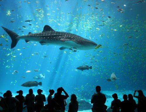 Akuarium dan Oceanarium