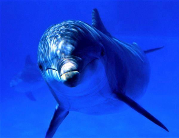 Baby Dolphin cute lumba