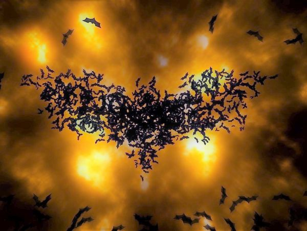 Bat friend kelelawar