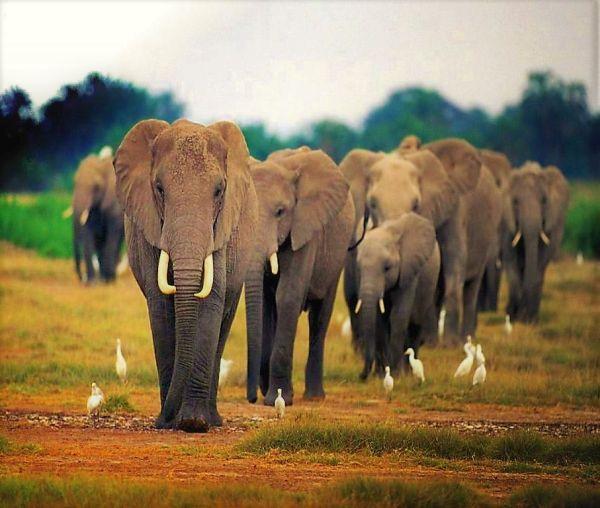 Elephant friend gajah