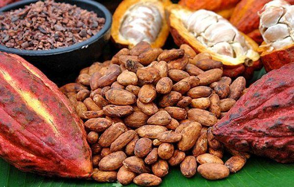 Buah coklat bijinya Chocolate seed